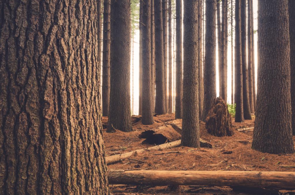 Zoom sur les troncs d'arbre d'une forêt
